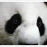 如何消除熊貓眼